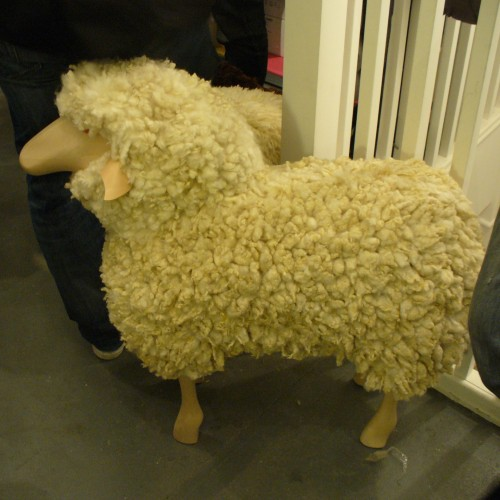 Theo sheep